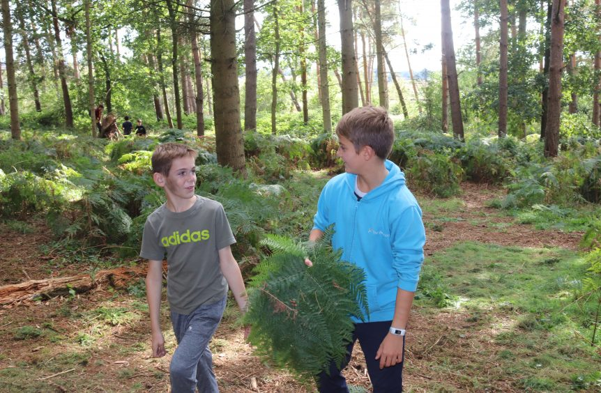 2 young boys looking at each other. One is holding a large fern